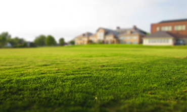 Residential Lawn Treatment